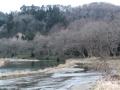 柳の河畔林