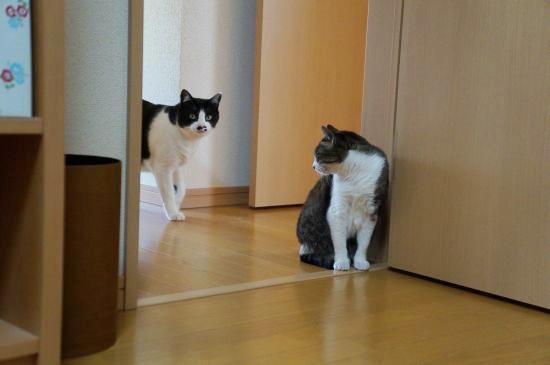 通りすがりのヒマ猫