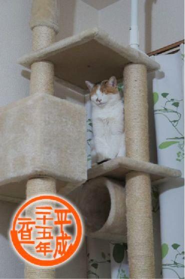nagira_20130101125908.jpg