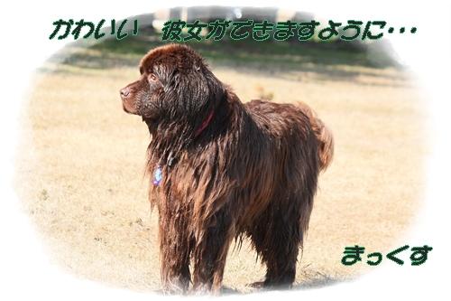 2012_0329biwako0071.jpg