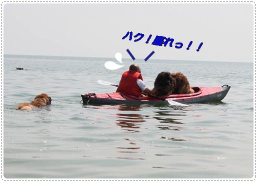 2012_0630sirohige0015.jpg