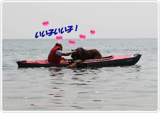 2012_0630sirohige0018.jpg