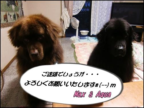 2012_1019kosumosu0026.jpg