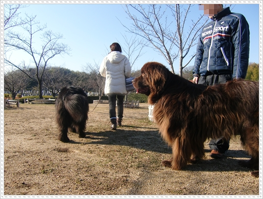 2013_0101otyougatu20018.jpg