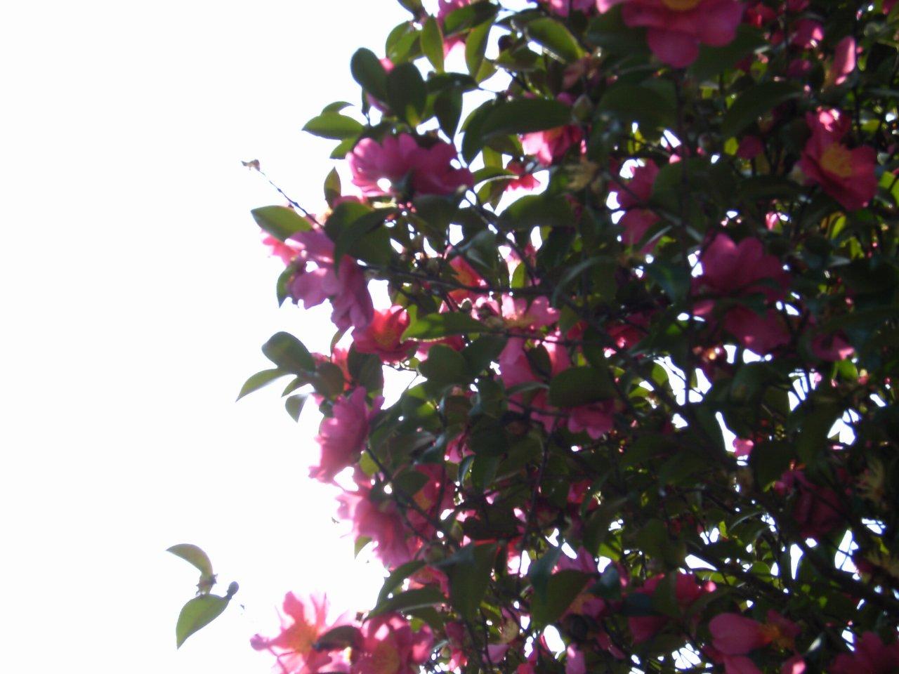 FloralColors27.jpg