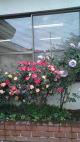 roseencasa11.jpg
