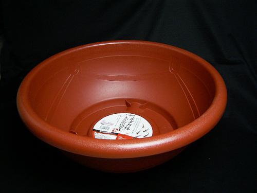 medaka hachi
