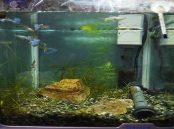 ブルー水槽1