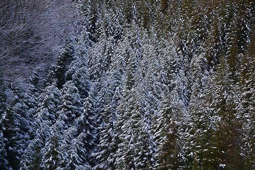 ご近所の冬景色