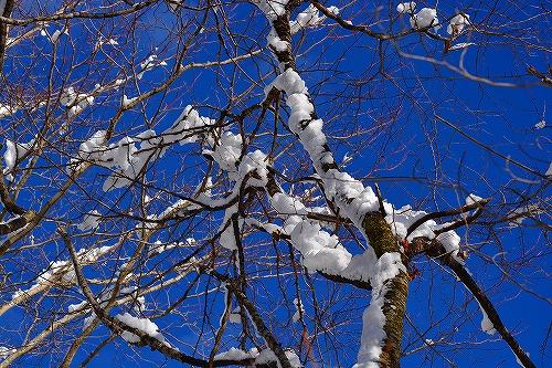 空の蒼と雪の白