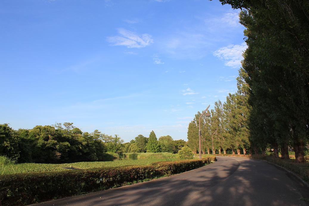 水元公園20120816-4