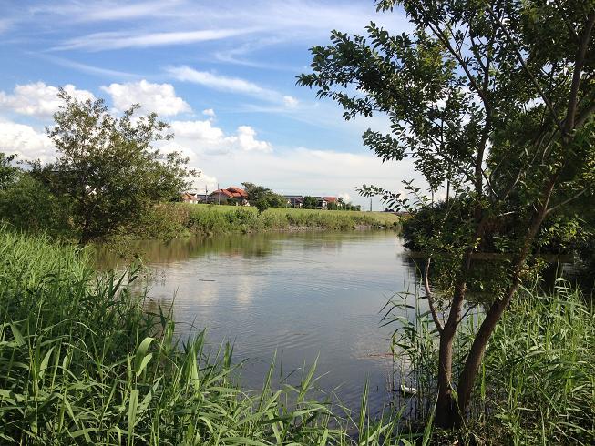 西水元水辺の公園1