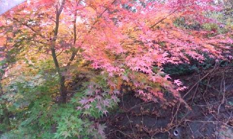 コテージに続く外廊下の紅葉