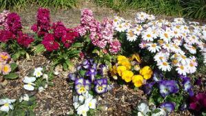 築地公園の花