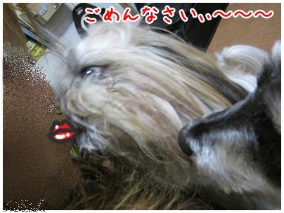 2012-11-24-03.jpg