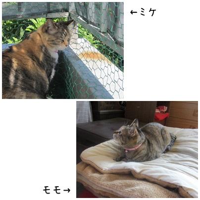 2012-12-08-01.jpg