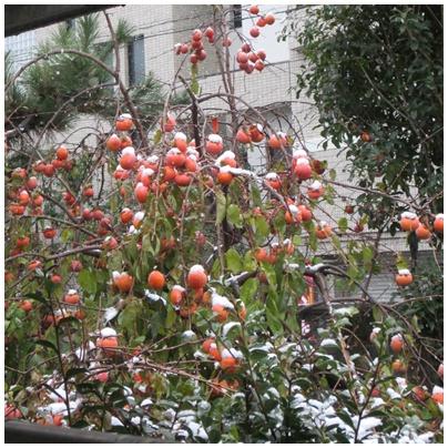 2012-12-10-01.jpg