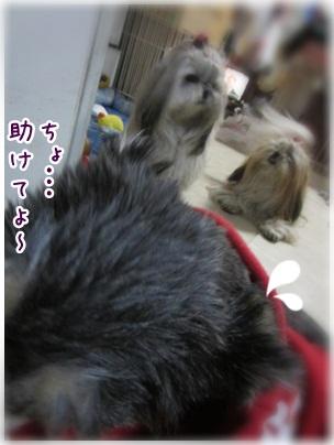 2012-12-26-03.jpg