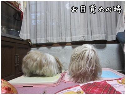 2013-01-04-01.jpg
