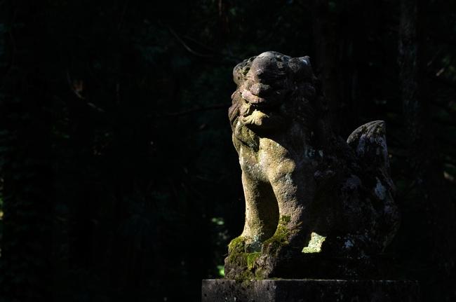 朝の光 神社-2