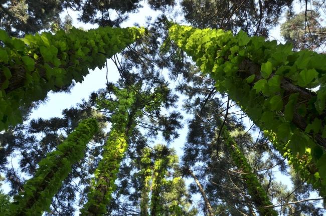 朝の林 その1