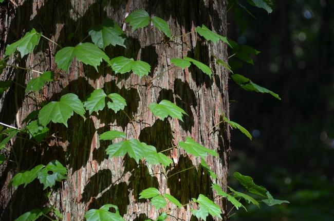 朝の林 その3