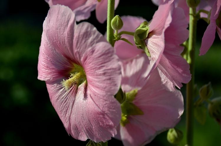 今日の花-3
