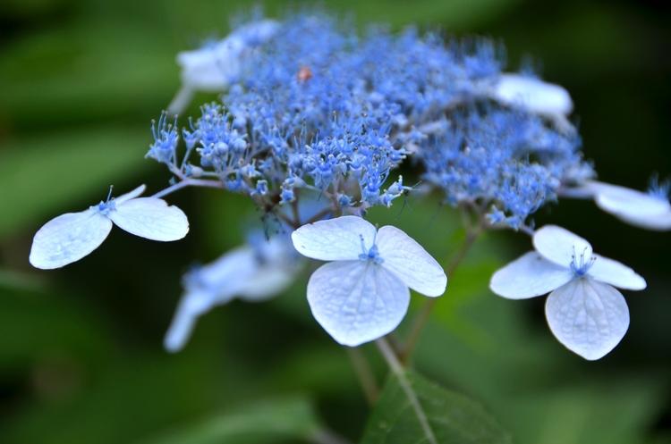 今日の花-1