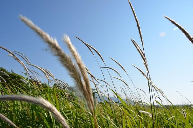 草むら-2