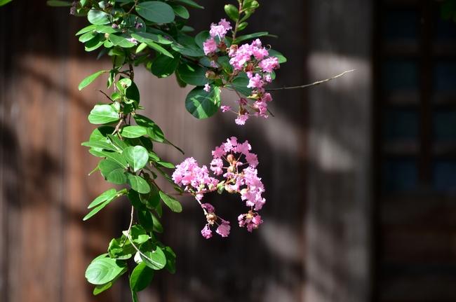 花 アラカルト-2