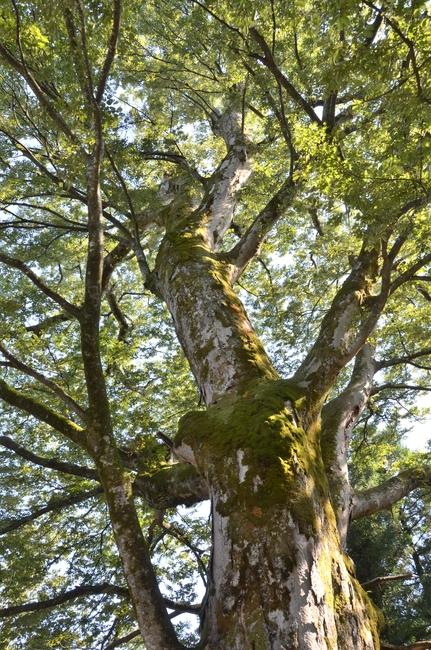 大樹 秋の陽ざし-1