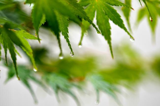 雨の恵み-2