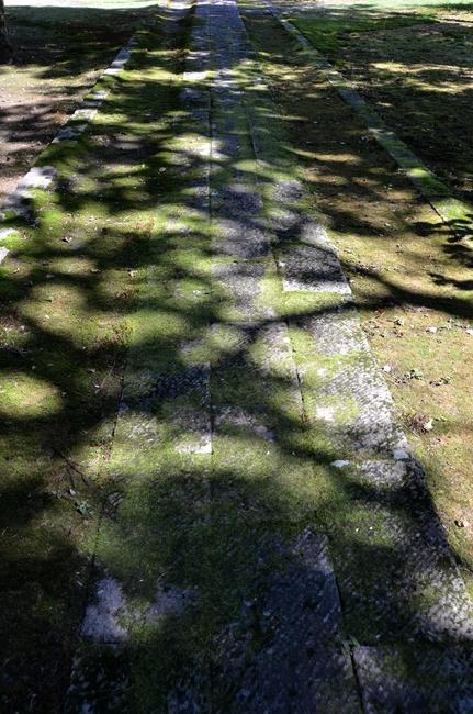 参道 木漏れ日-4