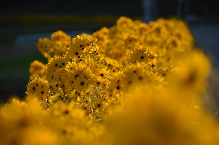 咲き乱れる-2