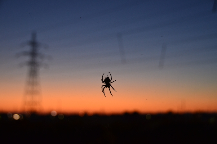 蜘蛛 夕暮れ-1