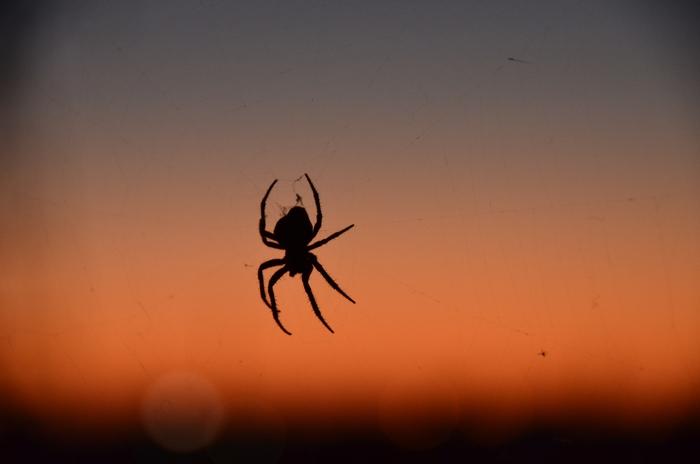 蜘蛛 夕暮れ-2