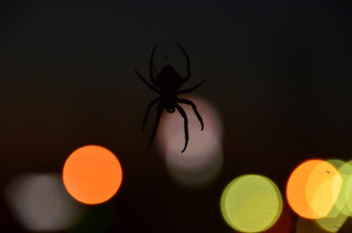 蜘蛛 夕暮れ-4