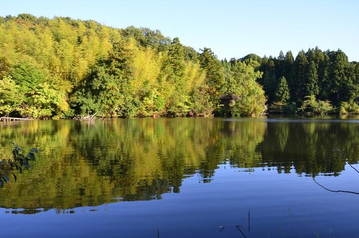 秋の池-3