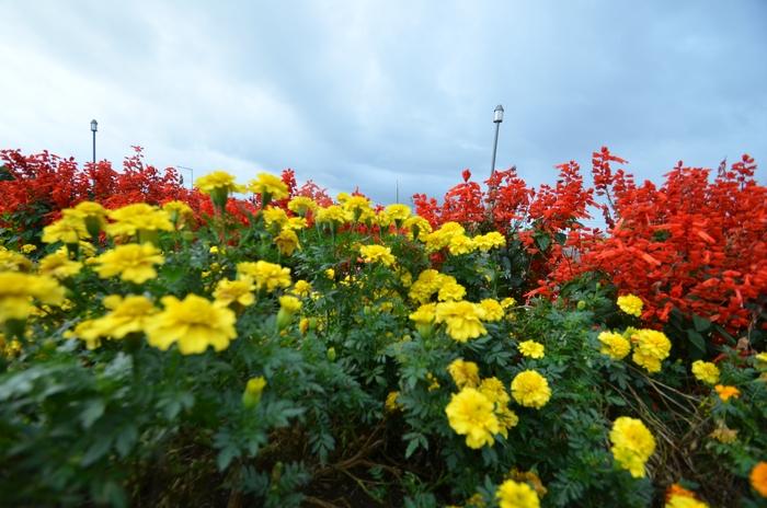 雨空の下 花-2