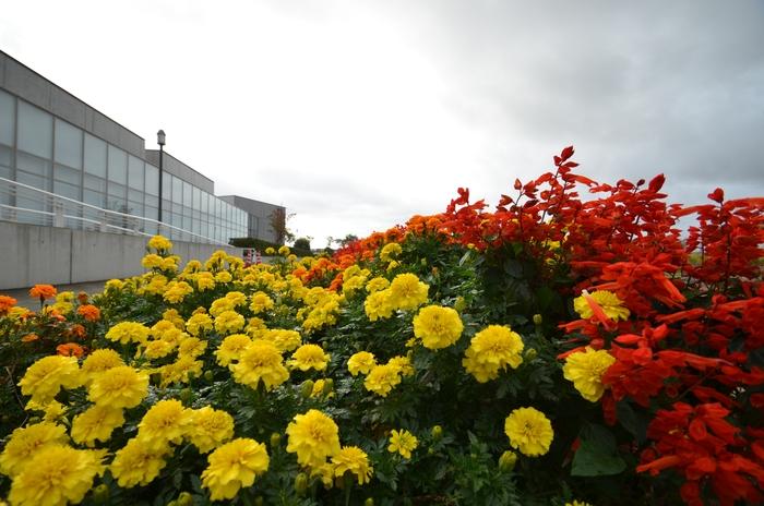 雨空の下 花-1