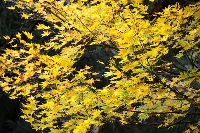 色づく葉-1-4