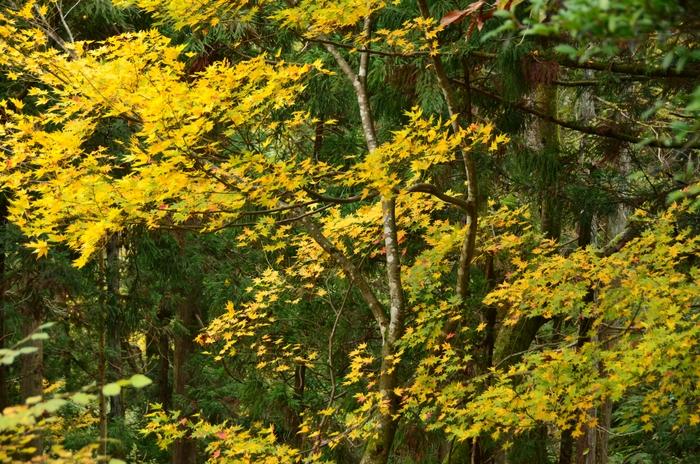 色づく葉-1-3