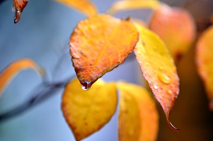雨の一日-3
