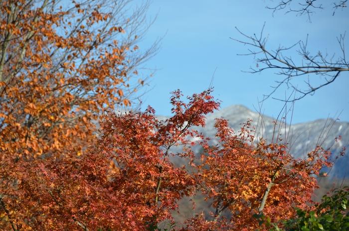 晩秋の山里 冠雪-4