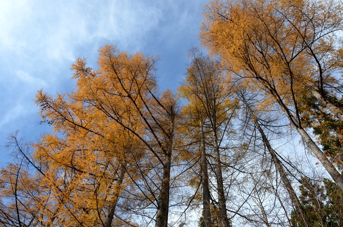 冬を待つ樹-1