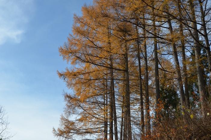 冬を待つ樹-2