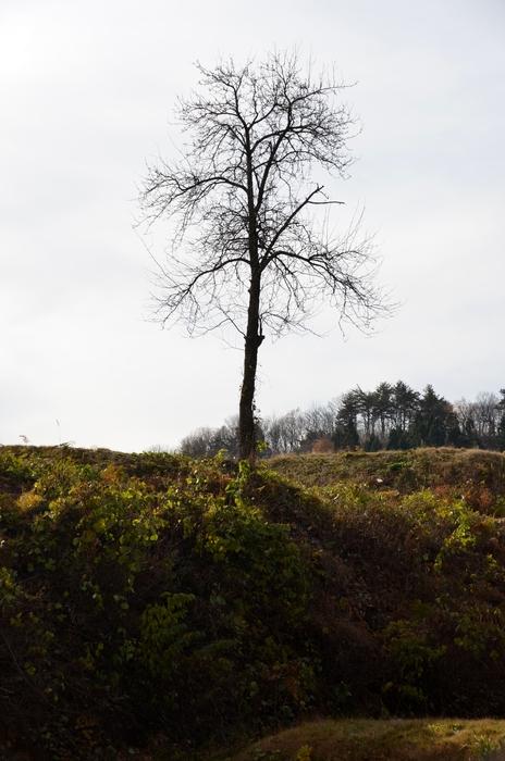 冬を待つ樹-4