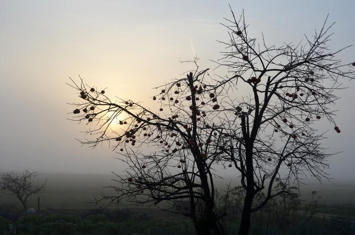 霧の朝-2