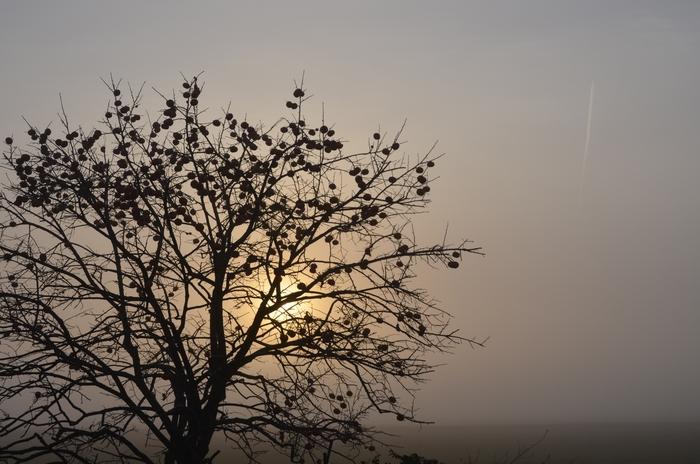 霧の朝-3