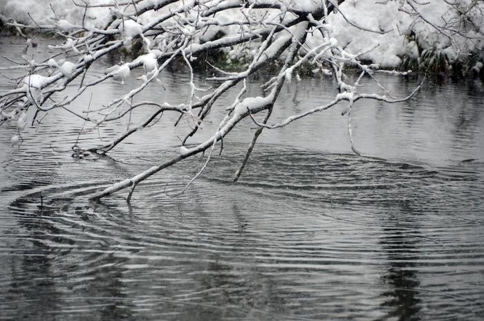 雪の池-3